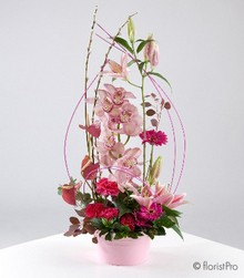 pink, red, orchid, anthurium, lily, modern, luxury, gift, arrangement, www.thegravesendflorist.co.uk